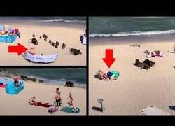 Enlace a Unos jabalíes se pasean por una playa llena de bañistas