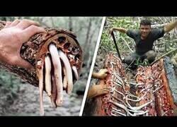 Enlace a Los árboles más peligrosos del planeta