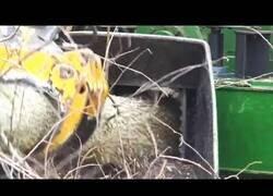 Enlace a Astilladoras y trituradoras de madera en acción