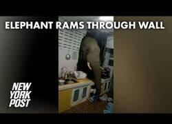 Enlace a Un elefante se cuela en la habitación de una casa en Tailandia