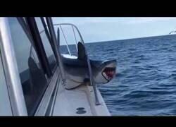 Enlace a Un tiburón salta del agua y cae en un yate