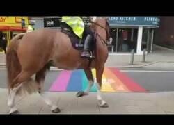 Enlace a Los caballos de policía homófobos
