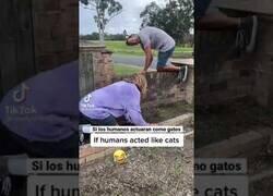 Enlace a Si los humanos actuáramos como gatos