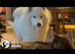 Enlace a El perro que quedaba petrificado cada vez que veía un gato