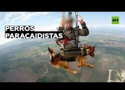 Enlace a Rusia prueba un sistema de paracaídas para perros de servicios