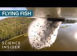 Enlace a Estados Unidos 'bombardea' sus lagos con peces para repoblarlos
