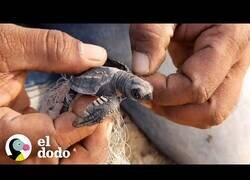 Enlace a Tortuguita enredada recibe ayuda para ser liberada