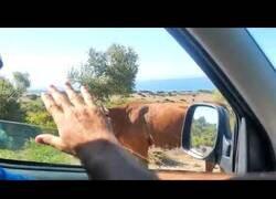 Enlace a Cuando te pierdes pero una amable vaca del lugar te indica el camino