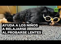 Enlace a La gata que trabajaba con niños en una clínica oftalmológica