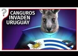 Enlace a ¿Qué pasaría si 47 millones de canguros invaden Uruguay?