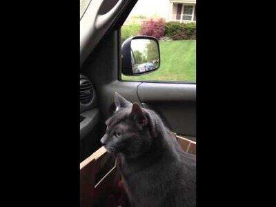 Un gato pregunta: '¿dónde vamos?', mientras se lo llevan al veterinario