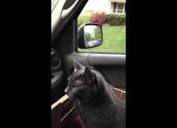 Enlace a Un gato pregunta: '¿dónde vamos?', mientras se lo llevan al veterinario