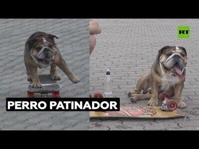 El perro que era un prodigio del skate
