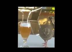 Enlace a Un pájaro bebiendo cerveza