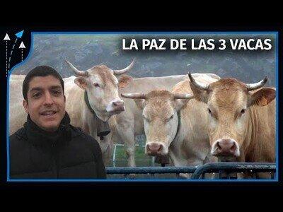 ¿Por qué Francia le da 3 vacas a España cada año?