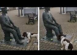 Enlace a Un perro espera a que una estatua le lance la pelotita