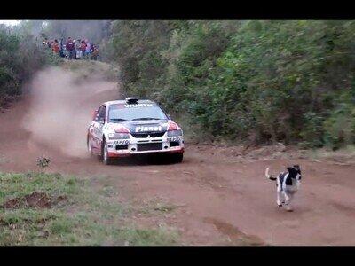 Un coche de rallys salta por encima de un perro en plena carrera