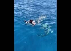 Enlace a Un hombre salta a un mar lleno de tiburones para salvar a un pajarillo