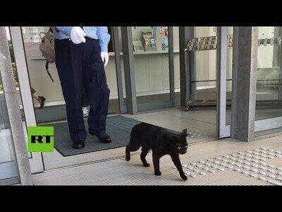 Gatos intentan entrar en un museo de Japón durante dos años
