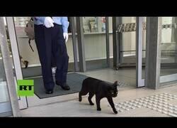 Enlace a Gatos intentan entrar en un museo de Japón durante dos años