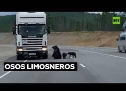 Enlace a Familia de osos paran a los conductores en mitad de una carretera rusa
