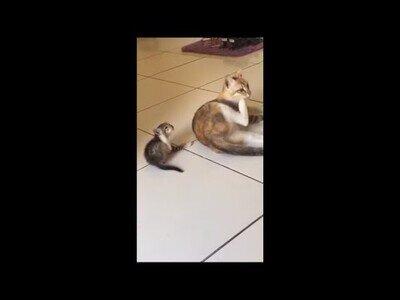 Un gatito intenta copiar todo lo que hace su madre
