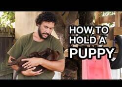 Enlace a Cómo sostener a un cachorrito