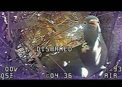 Enlace a Un dron cae en un nido y convive con un pájaro