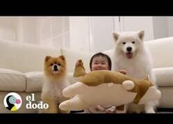 Enlace a ¿Para qué contratar una niñera teniendo perros?