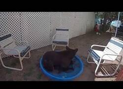 Enlace a Un oso se relaja en una pequeña piscina