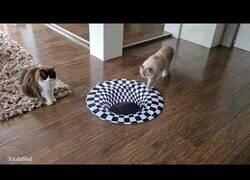 Enlace a Gatos versus ilusión óptica, lo flipan