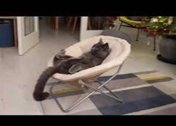 Enlace a Gato flipando mirando Tom & Jerry