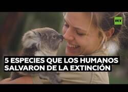 Enlace a 5 especies de animales que los humanos salvaron de la extinción