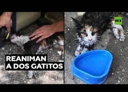 Enlace a Reaniman a dos gatitos que salieron heridos de un incendio