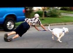 Enlace a Los mejores fails acompañados de perros