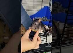 Enlace a La rata que sabía tocar la armónica