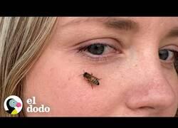 Enlace a Mientras todos huimos de las abejas, ella las busca
