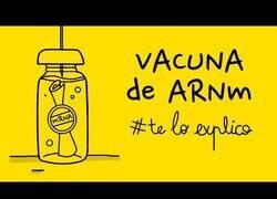Enlace a Así funciona la vacuna del covid