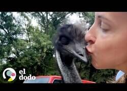 Enlace a Así es tener de un emú de mascota