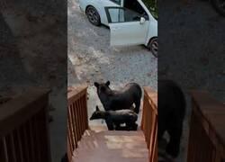 Enlace a Una familia de oso indaga en un coche