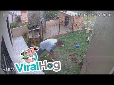 Una forma efectiva para acabar con las plagas en tu jardín