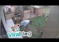 Enlace a Una forma efectiva para acabar con las plagas en tu jardín