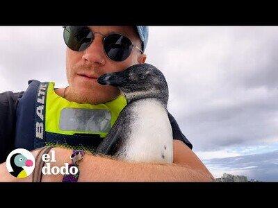 Un pingüino salta a un kayak para pedir ayuda a rescatistas