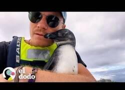 Enlace a Un pingüino salta a un kayak para pedir ayuda a rescatistas