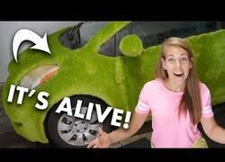 Enlace a El primer coche con 'carrocería viva' gracias a los brotes de chía