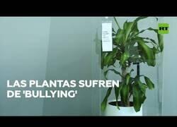 Enlace a La plantas también pueden sufrir de 'bullying'