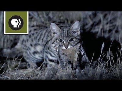 El gato más mortífero del planeta