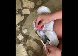Enlace a Extrayendo un cienpiés gigante del interior de una zapatilla