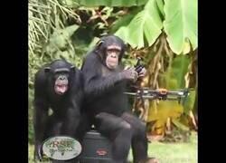 Enlace a El mono que sabía controlar un dron