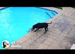 Enlace a Un perro salva a otro que había caído a la piscina
